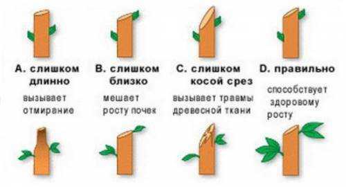количество заказов из россии на tmall во время дня холостяков выросло в два раза